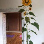 Eingang des Seminarraum / Raum der Ruhe